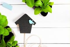 以房子的形式轻便短大衣用年轻新芽,射击、幼木、树苗在一个木箱和颜色用粉笔写 与拷贝空间的平的位置 免版税库存照片