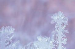 以棕榈树的形式冷淡的样式在柔和的淡紫色backgro 库存图片