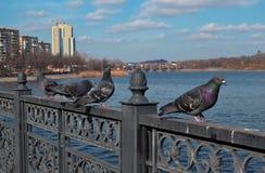 以河和蓝色春天天空为背景的四个青灰色位子 库存图片