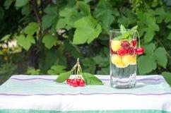 以绿色叶子为背景的玻璃用樱桃和苏打 图库摄影