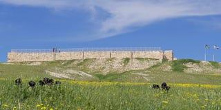 以色列堡垒和黑虹膜在Tel阿拉德在以色列 库存图片