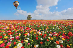 以色列春天 库存照片