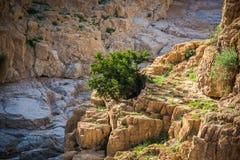 以色列沙漠 Qumran国家公园 库存照片