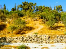 以色列的颜色 免版税库存图片