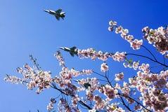 以飞行军用飞机的樱花为背景 免版税库存图片