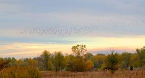 以飞鸟为背景的秋天风景 库存照片