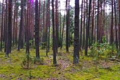 以高绿色树为背景的一块舒适森林沼地 休息地方成人和孩子的 免版税库存图片