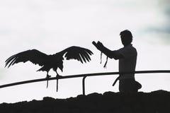 以鹰狩猎者 免版税库存图片