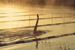 仰泳女性 库存照片