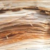 仿制木头 库存照片