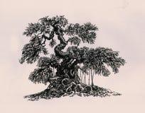 仿照印度榕树样式的盆景 库存照片