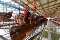 仿照村民样式的养鸡场 免版税库存图片