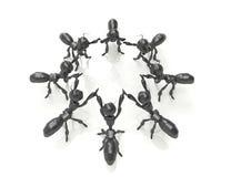 企业与立方体的队concept.3d蚂蚁。 库存照片