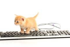 企业关键董事会小猫工作 图库摄影