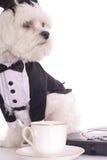企业小狗 库存照片