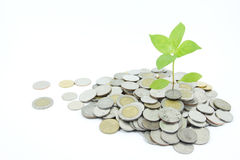 企业概念增长 免版税图库摄影
