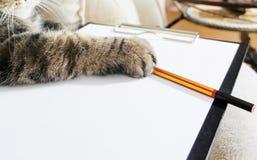 企业猫说谎空的剪贴板,做在铅笔,计划目录,购买的笔记 库存照片