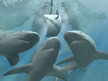 企业鲨鱼 向量例证
