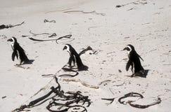 企鹅三重奏 免版税库存图片