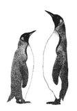 企鹅二 库存照片