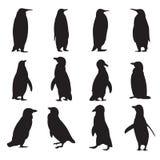 企鹅剪影的汇集 免版税库存照片