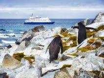 企鹅和巡航在南极洲海岛 免版税库存图片