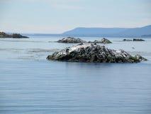 企鹅和美丽的cristaline水在Usuahia阿根廷 免版税库存照片
