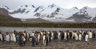 企鹅国王殖民地在南乔治亚南极洲 库存照片
