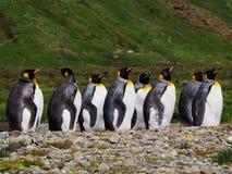 企鹅国王殖民地在南乔治亚南极洲 库存图片