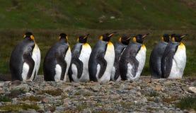 企鹅国王殖民地在南乔治亚南极洲 免版税库存图片