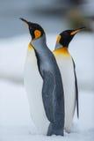 企鹅国王的夫妇 免版税库存照片
