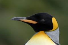 企鹅国王纵向 库存照片