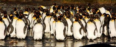 企鹅国王 库存照片