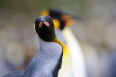 企鹅国王(Aptenodytes patagonicus)站立在海滩的 免版税库存图片