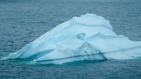 企鹅在南极洲爬上冰山 免版税图库摄影