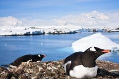 企鹅在南极洲 图库摄影