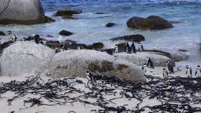 企鹅在自然生态环境 库存照片