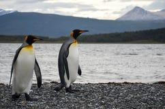 企鹅夫妇 库存图片