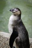企鹅旁边外形由湖的 免版税库存图片