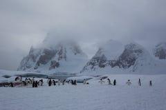 企鹅栖所 免版税图库摄影