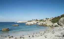 企鹅海滩在开普敦 库存图片