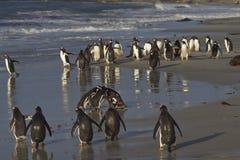 企鹅海滩 免版税库存图片