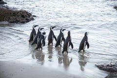 企鹅的海滩 图库摄影