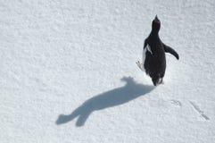 企鹅运行中 免版税库存照片