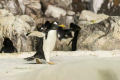 企鹅运行中 库存照片