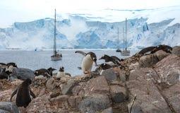 企鹅通过在他的额嘴的一个小卵石对一只斜倚的企鹅 安德列耶夫 库存照片