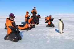 企鹅遭遇在南极洲 免版税库存照片