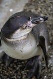 企鹅顶上的viewpont  免版税图库摄影