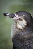 企鹅顶上的viewpont  免版税库存图片