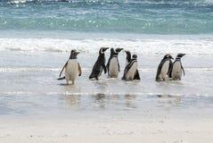 企鹅-麦哲伦和Gentoo在海滩 库存图片